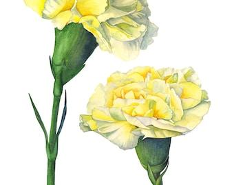 Carnation wall art print, C11716, flower art, Carnation watercolor painting, yellow wall art, A3 size print, Botanical wall art print