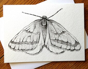Moth, November Moth, Insect 5 x 7 Black and White Illustrated Blank Card, Entomology