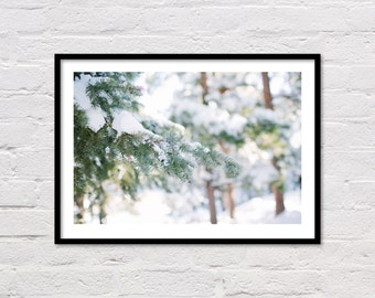 Winter Print, Forest Photo, Winter Evergreen, Forest Print, Winter Landscape, Colorado, Winter Photography, Printable Wall Art, Snow Print