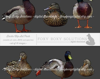 Ducks Complete Set (color, black & white, and sepia tone): Clip Art, set of 18 images