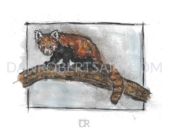 100 Animals, 100 Days: 100/100 The Red Panda DIGITAL FILE