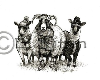 Sheep with 'tudes