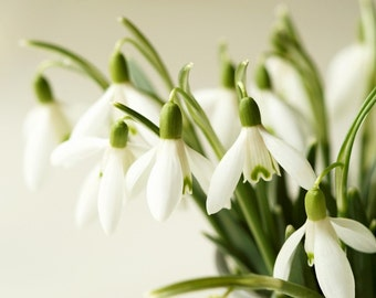 Fine art photography print, nature photography. Spring.