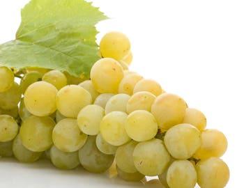 Grape 'Blanc du Bois' Vitis Live Plant