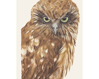 Southern Boobook 'Boris' - Coloured pencil art - Australian wildlife - PRINT