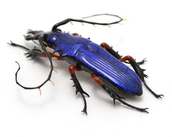 Sapphire Jewel Longhorn Beetle - realistic dichroic lampwork glass insect beetle figurine glass artist Wesley Fleming