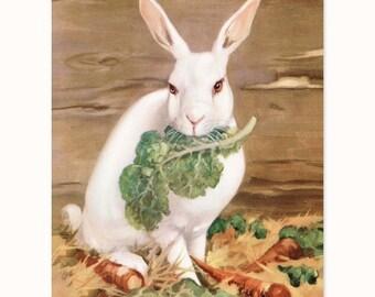 "Rabbit Art, Bunny Print (Vintage Style Wall Decor, Farmhouse Artwork, 1930s White Cottage Chic) Farm Animals Nursery --- ""Snow Queen"""