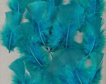 20 Feathers , Turquoise Turkey, Small