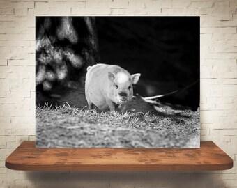 Pig Photograph - Fine Art Print - Black White Photo - Home Wall Decor - Farm House - Pig Pictures - Farm Photography - Animals - Wall Art