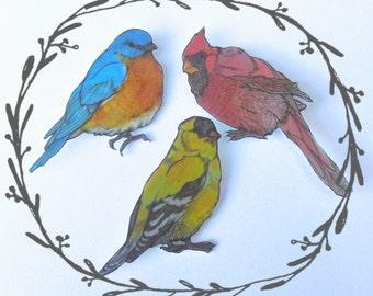Backyard Bird Illustrated Brooch