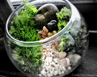 Mini Bowl Terrarium with Live Moss - Already Assembled Ready to Gift