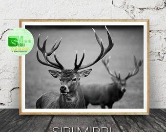 Black and White Deer Print, Deer Photography, Instant Digital Download, Animal Printable, Modern Minimal Scandinavian Wall Art Print