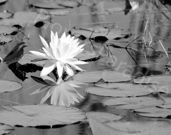 Lily Pad Photograph // Black and White Photography // White Flower Photograph // Fine Art Photography