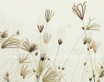 Fine Art Photograph, Botancal Photograph, Floral Photography