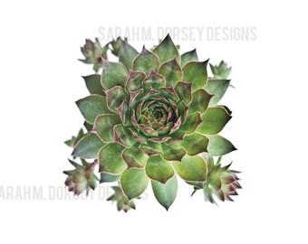 Succulent Photography Digital File