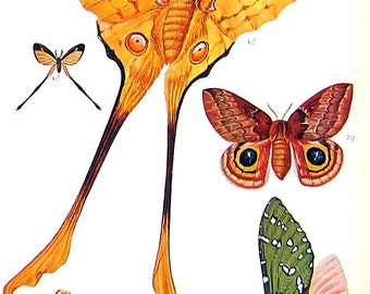 Tropical Moth, Tropical Butterfly - Exotic Moth, Exotic Butterfly - 1973 Vintage Book Page - 10 x 7