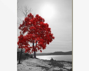 Black White Red Wall Pictures, Red Tree Decor, Red Pop Of Color, Red Gray Tree Lake Wall Matted Picture