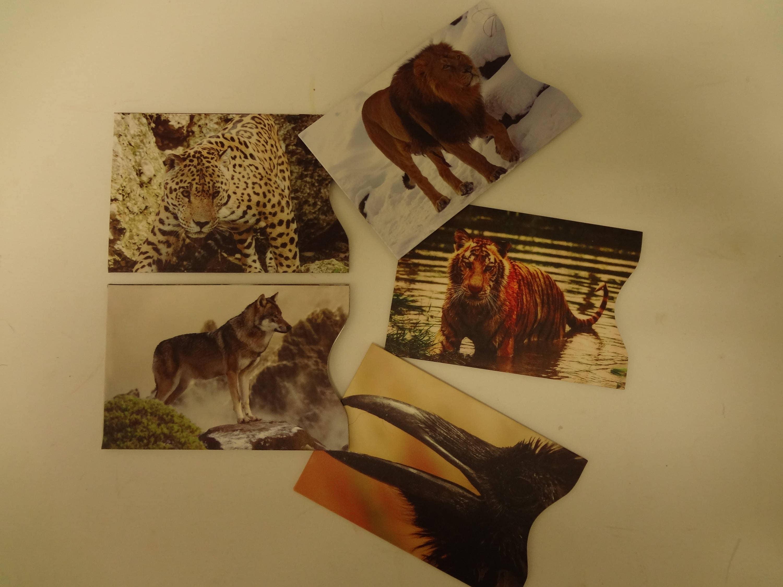 Set Of 5 Rfid Wild Animal Blocking Credit Card Protectors 1