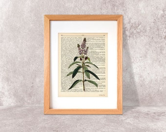 Peppermint print-peppermint herb dictionary print-Kitchen wall art-Peppermint on book page-herbs and spices print-by NATURA PICTA-DP056