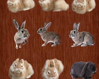 5 Realistic Fake Bunny Overlays