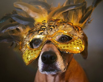 Masked Dog Halloween Dog Photo Print
