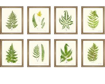 """Fern Print Set. ANY 8 fern prints. Foliage Wall Art Set. Ferns print set.  5x7"""" 8x10"""" 11x14"""""""