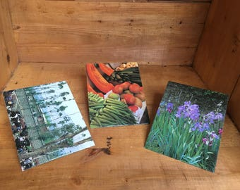 Colorful Garden Seed Packets set of three
