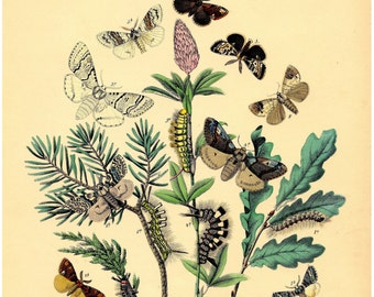 Nature decor, Wall decor butterfly, Nature art, Butterfly art, Nature print, Butterfly decor, Nature picture, Butterfly print, 166