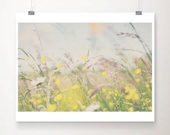 buttercup photograph yellow flower photograph buttercup print nature photography botanical print wild flowers print summer photograph