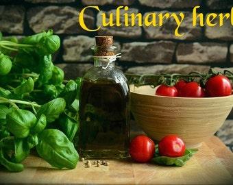 Culinary Herbs Delightful Delicious Healthy Food eBook PDF Digital Download - Resale Right