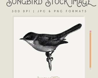 Vintage Song Bird Illustration Instant Download Digital printable picture clipart graphic transfer high resolution