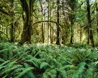 Fine Art Landscape Photography Print, Hoh Rainforest, Pacific Northwest Landscape Print,  Wall Art Print, Nature Print, Travel Photography