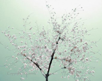 Cherry Blossom Tree Art Photograph Mint Green Soft Pink White DC Cherry Blossom Art 8x10