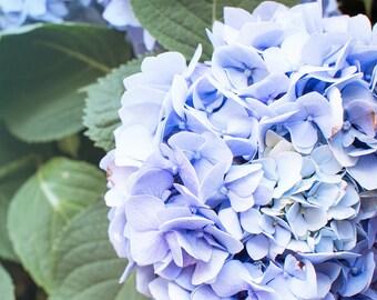 Hydrangea Art Print - Nature Photograph - Flower Photography Art - Fine Art Print - Wall Art Decor - Garden Art // Blue Hydrangea & Hydrangea photograph | Etsy