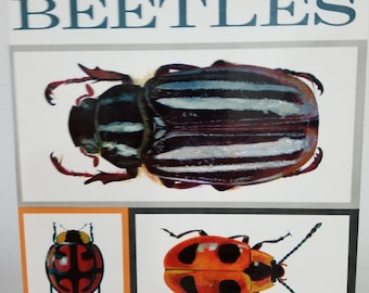 SALE! A Book of Beetles by Dr. Josef R. Winkler with 56 Stunning Full Color Plates suitable for framing by Vladmir Bohac Czechoslovakia 1964
