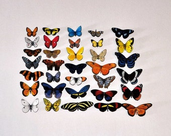 Butterfly Magnets Set of 34 Insects Refrigerator Magnets Home Decor by Doug Walpus