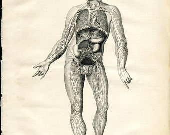 2 Original Prints - Human Anatomy - 1870's
