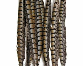 "Long Feathers, 10 pieces - 14-16"" NATURAL Lady Amherst Pheasant Tail Feathers : 3442"