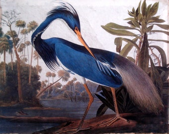 Painting Print Ready to Hang Audubon Blue Heron Museum Quality Ready to Hang! Rich!