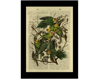 Vintage Carolina Parakeets Birds - Dictionary Antique Book Page Art