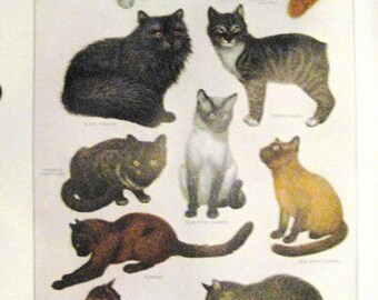 Cats Original Page Print from 1963 Noah Webster International Dictionary