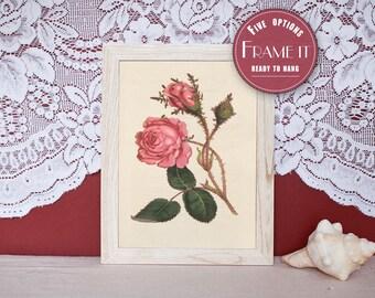 "llustration of Soft- Grass- Moss Rose - framed fine art print, flower art, home decor home decor 8""x10"" ; 11""x14"", FREE SHIPPING 119"