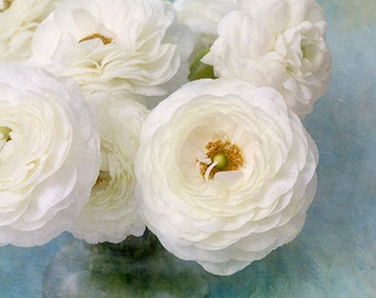 White Ranunculus Photograph,  Floral Art Print, Flower Still Life Art, Cottage Chic Decor