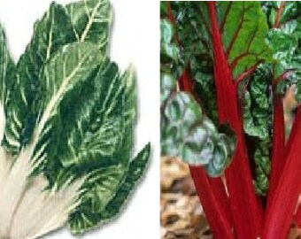 Chard White (150 seeds) or Chard Vulcan-red (30 seeds)