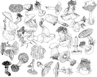 Mycology (11x13 print)