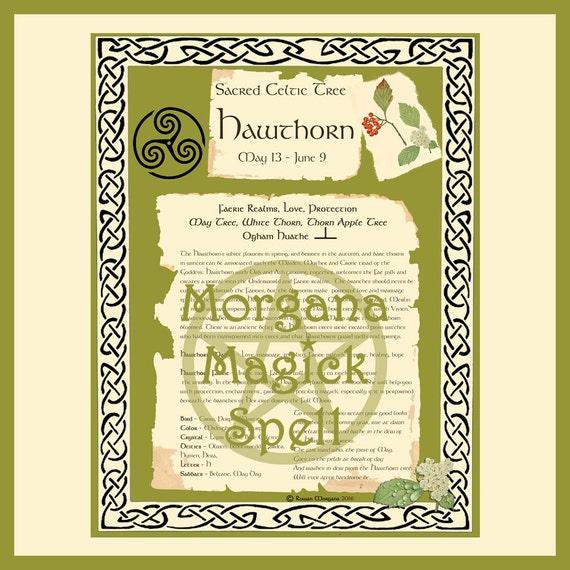 Hawthorn Sacred Celtic Tree