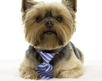 Pet neck ties