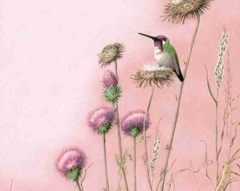 hummingbirds paintings in pinks 11X16 print, Costa's hummingbird on a thistle seed head, Bird Art, nature