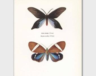 "Butterfly Print (Boho Decor Wall Art, Vintage Natural History Book Plate) -- ""Hope Butterflies"" No. 86-2"