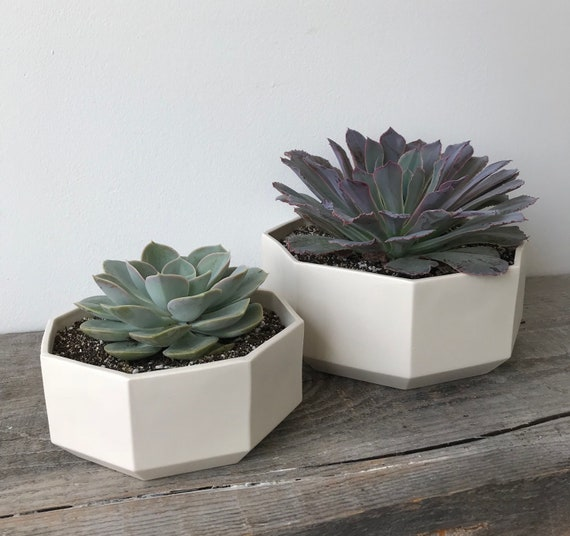 Octagon Succulent Planter, Ceramic Porcelain Modern Tabletop Planter, Small or Large, or Set